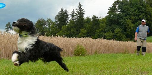 Hundefrisbee-erste-Schritte